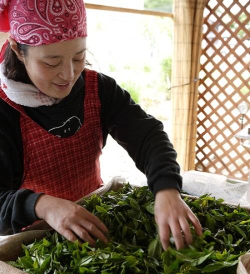 /data/project/113/檜山茶プロジェクト梶原さん.jpg