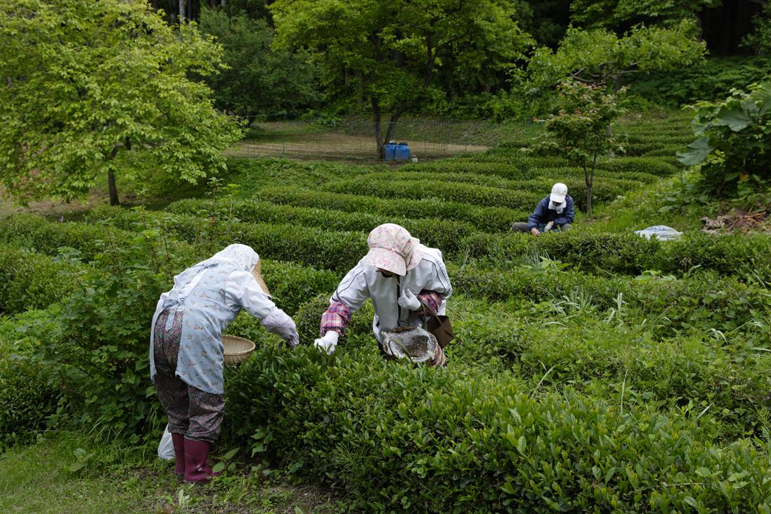 /data/project/113/茶畑.jpg