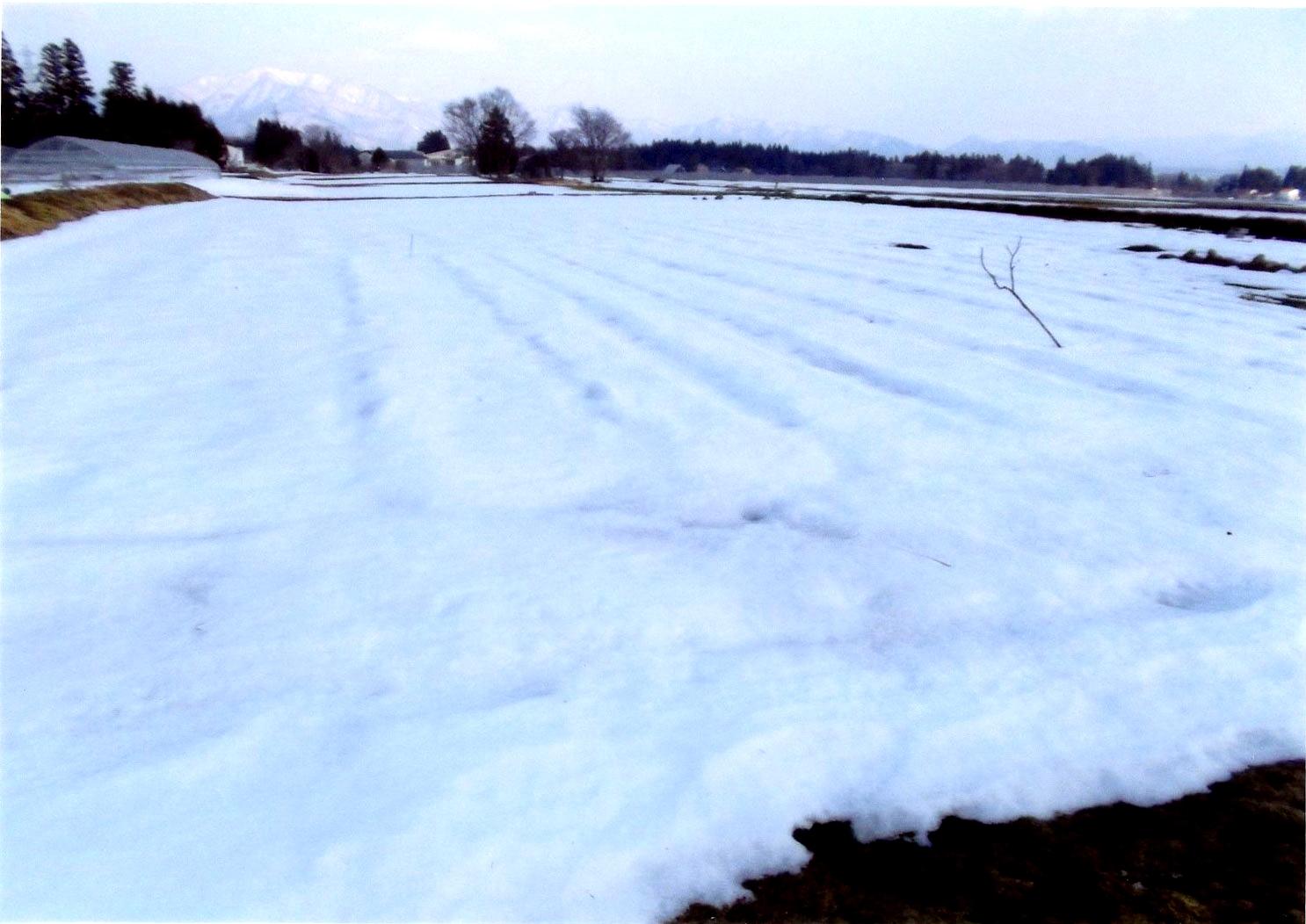 /data/project/493/雪に覆われた畑3.jpg