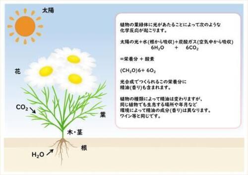 /data/project/705/光合成.jpg