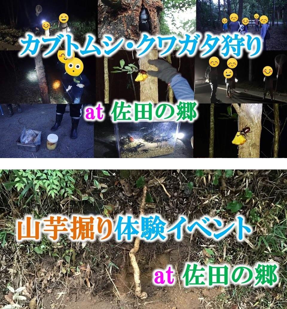 /data/project/829/カブトムシ・山芋掘り.jpg