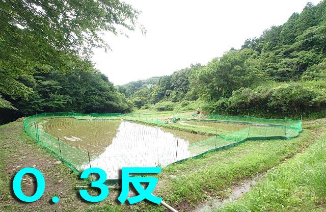 /data/project/829/田んぼのオーナー権_0.3.jpg