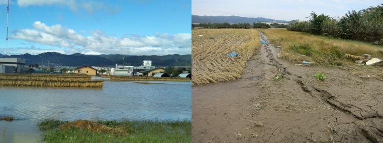 /data/project/836/台風による浸水被害.jpg